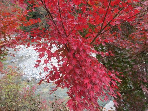 夕森公園 紅葉1