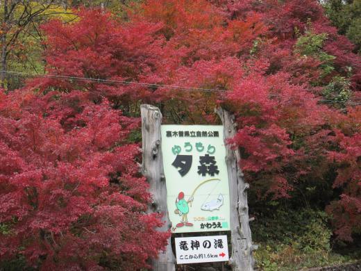 夕森公園 紅葉2